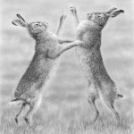 Boxing_hares
