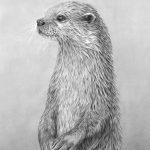 Otter_standing