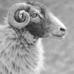 swaledale_profile