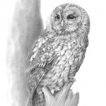 Owl prints by Nolon Stacey