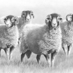 Summer swaledales Nolon Stacey