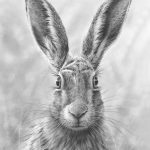Hare Prints by Nolon Stacey