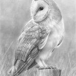 Barn+Owl+2