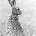 Morning hare